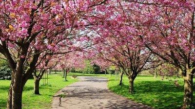 Primavera inicia con clima fresco a cálido y vientos del sureste