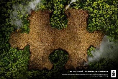 Paraguay más Jaguareté es la nueva campaña que pretende la extensión de Ley de Deforestación Cero