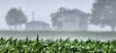 Precipitaciones dispersas animan un poco a los productores de granos