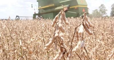 La Nación / Envíos de soja y arroz encabezan repunte del comercio exterior