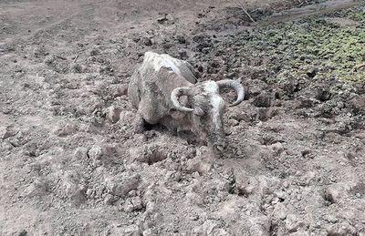 Imagen dantesca en Pozo Hondo causada por la seca