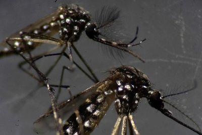 ¿El dengue puede proporcionar cierta inmunidad contra el COVID-19?