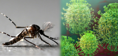 Investigación demostraría vínculo entre dengue y cierta inmunidad al Covid-19