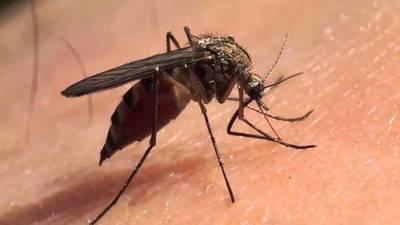 """Dengue y Covid-19: """"En los próximos meses pueden juntarse dos epidemias"""""""