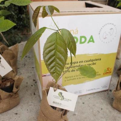 Lanzan sello que permitirá a la ONG A Todo Pulmón plantar miles de árboles nativos