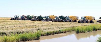 A pesar de adversidades, crece producción de arroz