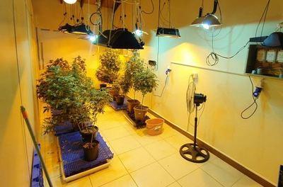"""Senad encontró laboratorios de """"marihuana vip"""""""