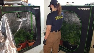 """HOY / Operación Monkey Glue: 12 allanamientos en simultáneo desbaratan laboratorio de """"marihuana vip"""""""