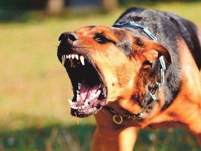 Terrible: perro atacó a  niño y le arrancó la oreja