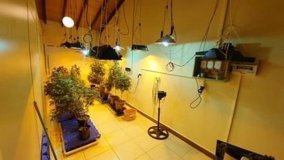 """HOY / """"Marihuana vip"""": fusionaban subvariedades para obtener híbridos, explicó especialista"""
