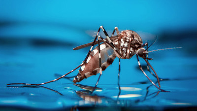 ¿Podría el dengue dar inmunidad contra el covid-19?