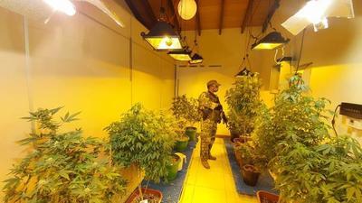 """Desbaratan laboratorios de """"marihuana vip"""" en 12 allanamientos simultáneos"""