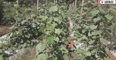 """Joven Mirandense encuentra """"oxígeno"""" económico en la horticultura"""
