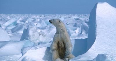 La Nación / Nuevo récord de frío ártico de