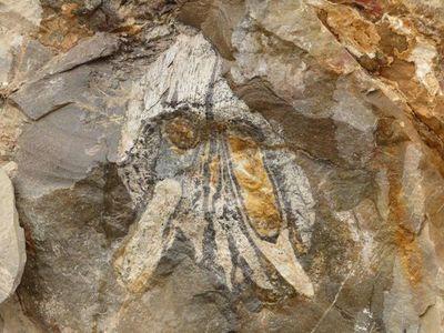 Hallan fósiles de un gran depredador marino del Jurásico