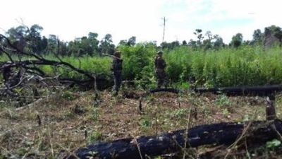 Denuncian que niños y adolescentes indígenas son raptados por narcos para trabajos en plantaciones