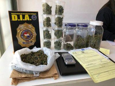 Semillas de marihuana vip ingresaban de contrabando