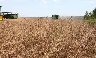 HOY / Falta de lluvia demora inicio de cosecha de soja