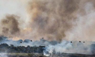 Declaran emergencia ambiental para Boquerón