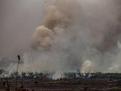 Por qué el Pantanal sufre los peores incendios de las últimas décadas