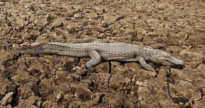 La Nación / Declaran emergencia por sequía e incendios en Boquerón