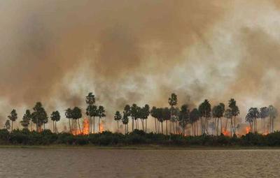 Trágicos incendios en el Pantanal brasileño ya consumieron un 12% del territorio