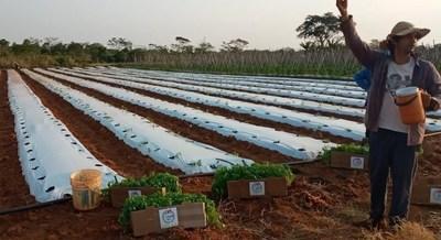 Innovación tecnológica llega a productores hortícolas de diversas zonas del país