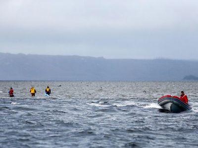 Alertan del riesgo de navegación por las 380 ballenas muertas en Australia