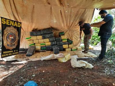 Senad incauta más de 1.500 kilos de marihuana en Canindeyú