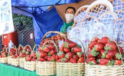 Gobierno destina casi G. 7.500 millones para activar emprendimientos productivos a través del programa Tenonderã