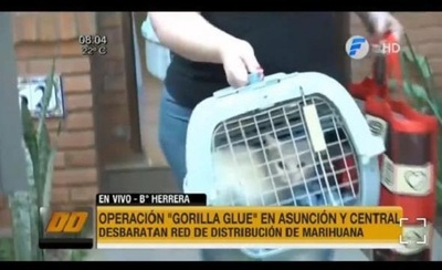 Entregan gatas a madre de detenida en operativo Gorilla Glue