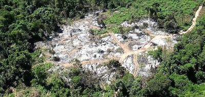 Invasores que alegan pobreza recaudan G. 60 millones por cada hectárea de valioso bosque depredado