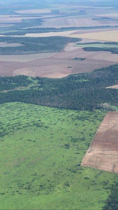 Indígenas invaden tierras mecanizadas de empresa y arriendan a brasileño