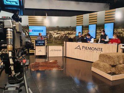 Piemonte ofrece 420 cabezas de invernada en su feria televisada