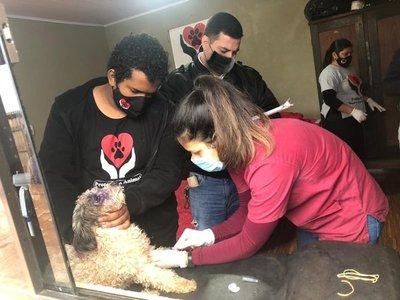 Como previa al Día Mundial contra la Rabia, invitan a vacunar mascotas en el AutoCan 2020