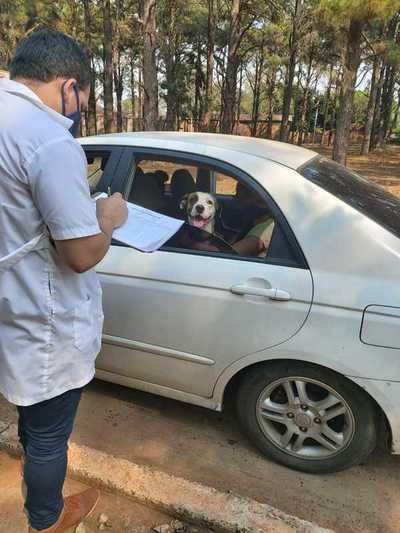 Vacunación antirrábica gratuita para mascotas en San Lorenzo