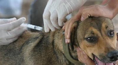 HOY / Jornada gratuita de vacunación antirrábica para perros y gatos