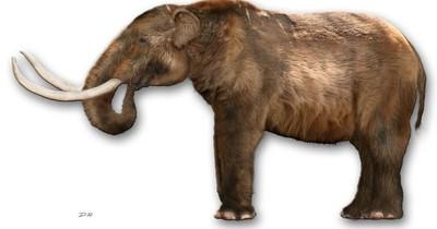 La Nación / Hallan en Colombia restos fósiles de mastodonte extinto hace 10.000 años