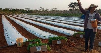 La Nación / Unas 200 familias de Caaguazú accedieron a cultivos innovadores
