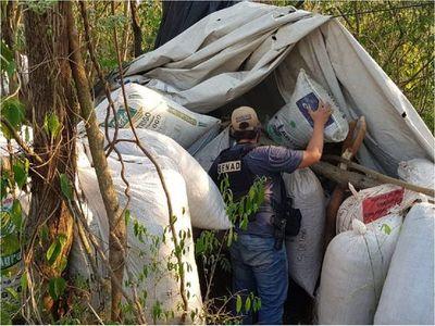 Senad incinera 2,5 toneladas de marihuana en Caaguazú
