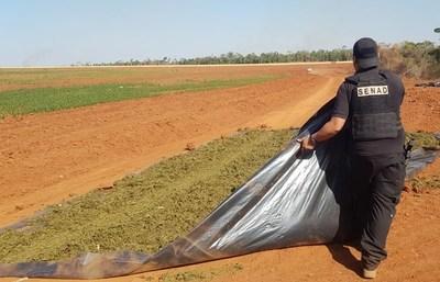 Hallan casi 9.000 kilos de marihuana que estaban siendo secado al sol sobre carpas