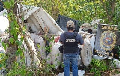 SENAD detecta 2.5 toneladas de drogas en Caaguazú