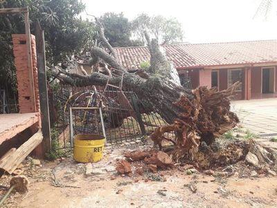 Caída de árbol destruyó parte de la infraestructura de una escuela