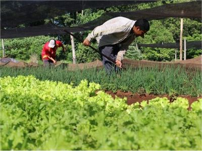 Recorte presupuestario del MAG impactará en agricultura familiar