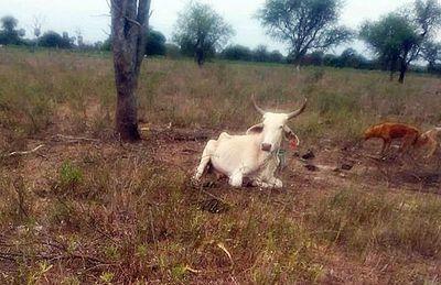 Predicciones meteorológicas causan pánico a los productores del Chaco
