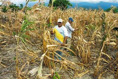 Agricultores esperan reactivar la economía en 2021 pese a la crisis y la sequía