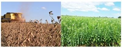 Productores de soja y sésamo son los más preocupados ante sequía