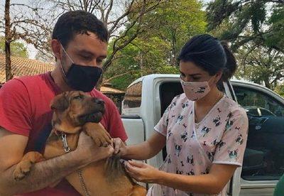 La rabia es mortal en humanos y hay que vacunar a las mascotas