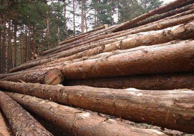 Paraguay podrá exportar madera exótica