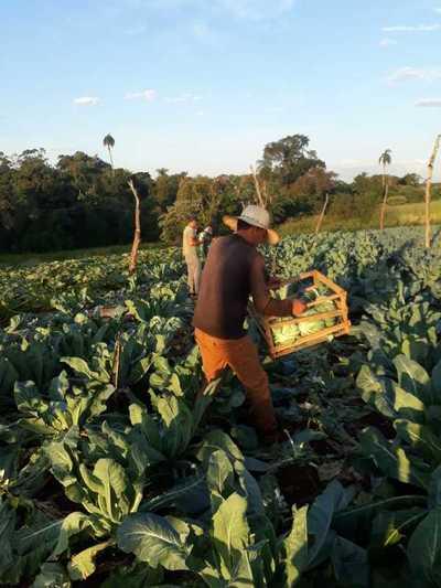 Crean consejo de productores para optimizar asistencia en Alto Paraná